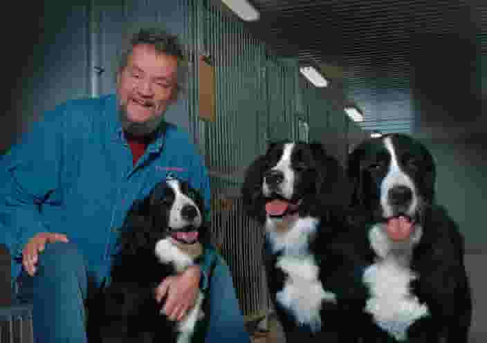 Éric St-Pierre accompanied by three Labernois dogs
