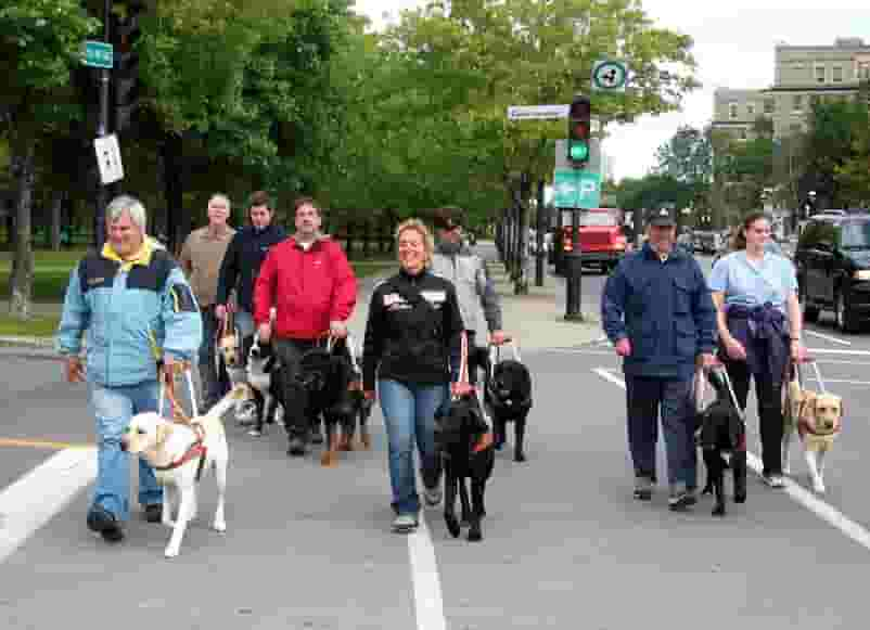 Dog guide program group attends downtown training